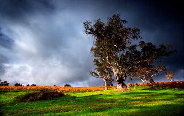 Фотообои с природой поле тучи (nature-00088)