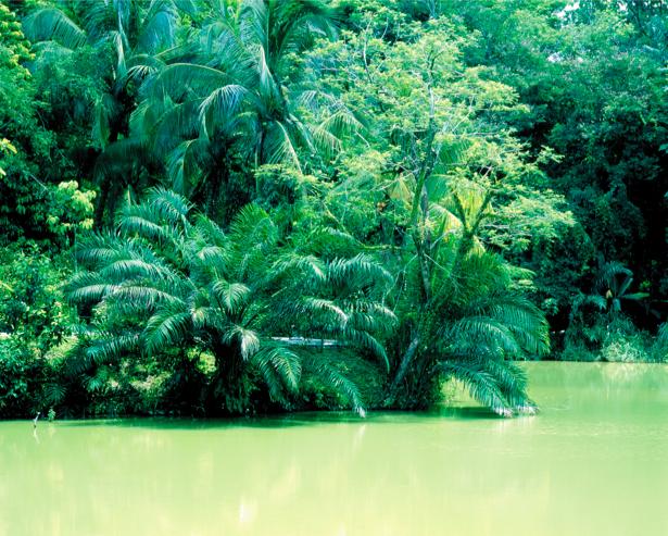Фотообои озеро лес тропики (nature-00395)