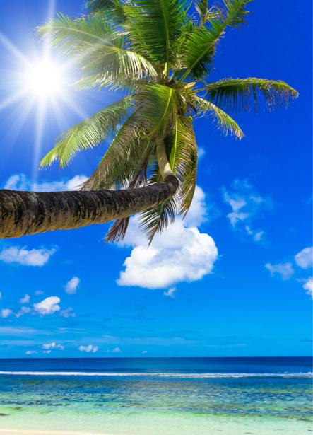 Фотообои пальма на фоне моря (sea-0000193)