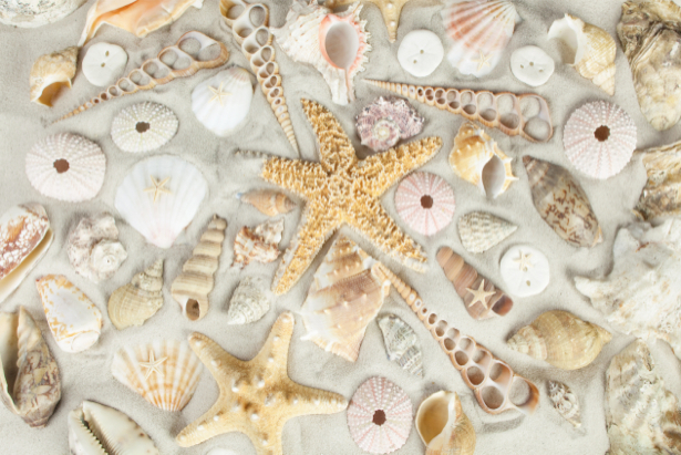 Фотообои в ванную ракушки на песке (underwater-world-00131)