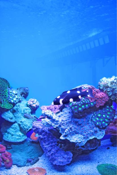 Кораллы, рыбки фотообои для ванны (underwater-world-00165)