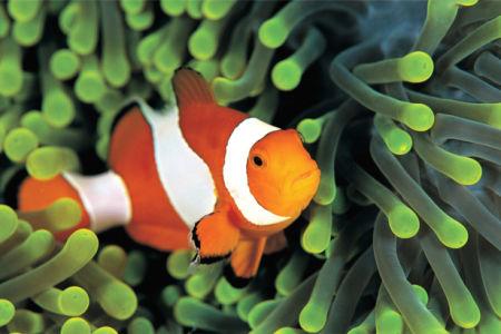 Фотообои для ванны рыбка-клоун (underwater-world-00200)