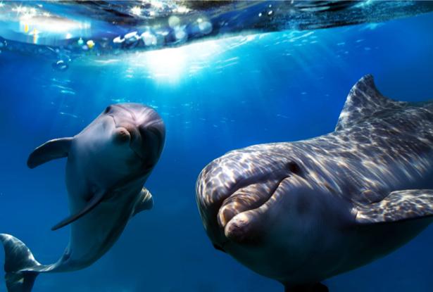 Фотообои дельфины под водой (animals-0000270)