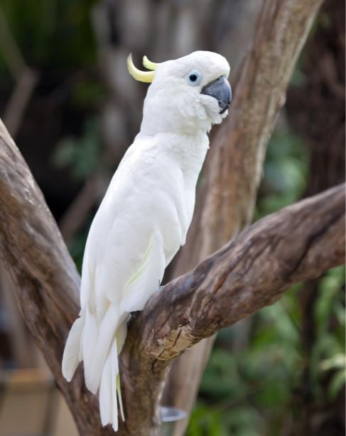 Фотообои белый Попугаи (animals-0000411)