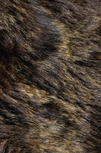 Фотообои текстура мех волка (background-0000307)