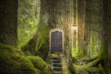 фотообои дверь в лесу (door9)