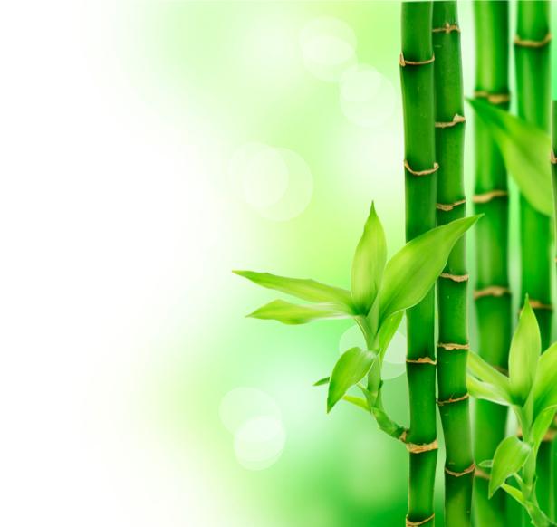 Фото обои на стену - Бамбук (flowers-0000253)
