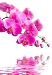 flowers-0000280