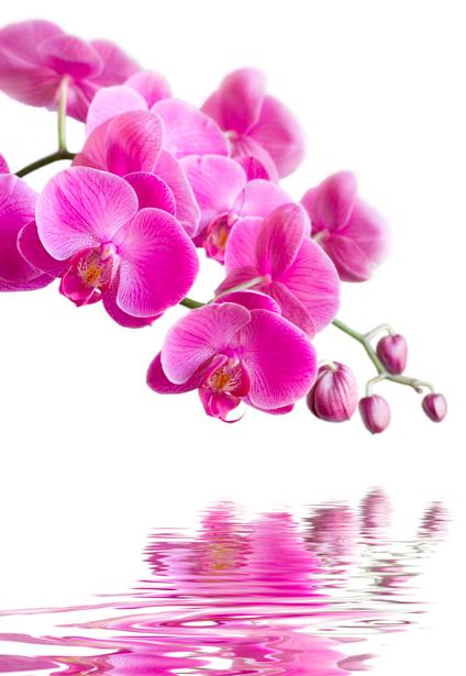 Ветка розовой орхидеи над водой фотообои цветов (flowers-0000280)