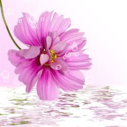 flowers-0000306