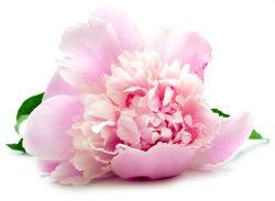 flowers-773