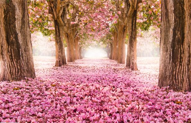 Фотообои цветущий парк розовый (nature-0000689)