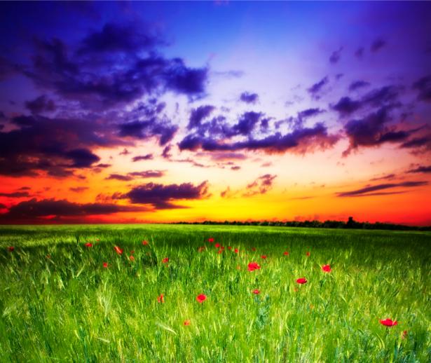 Фотообои поле с маками небо (nature-00304)