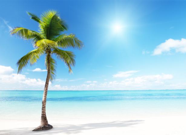 Фотообои одинокая пальма и море (sea-0000184)