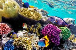 underwater-world-00031