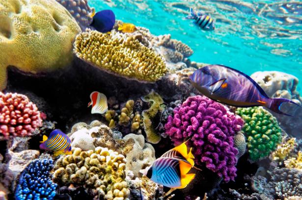 Подводный мир - Фотообои ванная (underwater-world-00031)