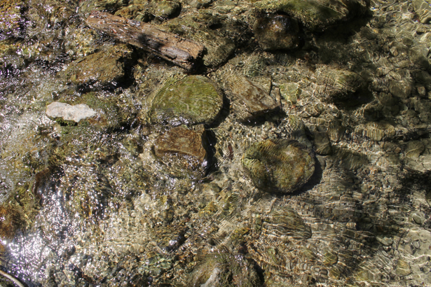 Фотообои для ванны река прозрачная (underwater-world-00118)