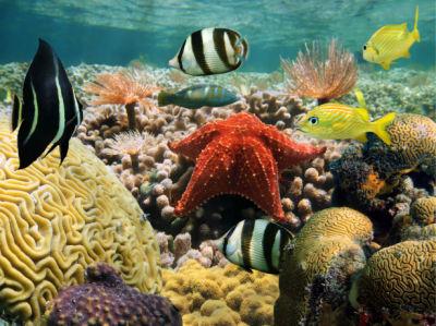 Фотообои в ванную подводный мир звезда (underwater-world-00198)