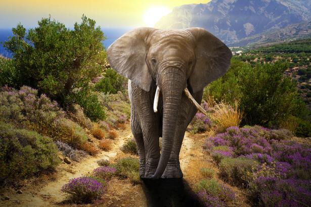 Фотообои слон в природе (animals-0000348)