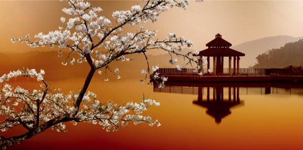 Фотообои Япония сакура храм (city-0000821)