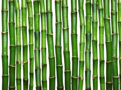Фотообои на стену зеленый бамбук (flowers-0000112)