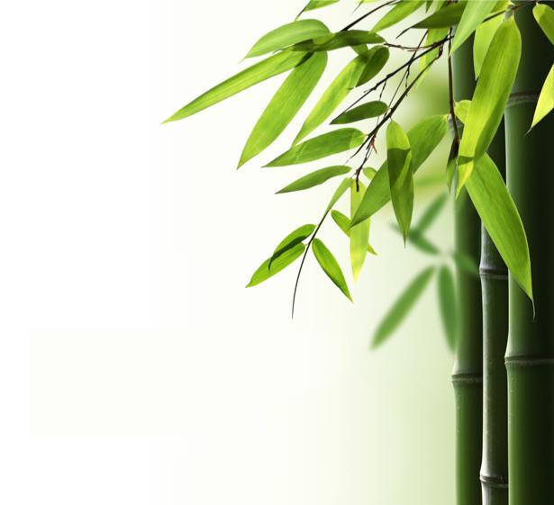 Фото обои для стен Бамбук (flowers-0000488)