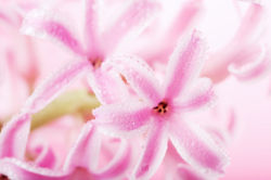 flowers-0000562