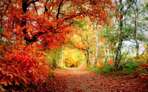 Фотообои виды природы дорожка в лесу (nature-00075)