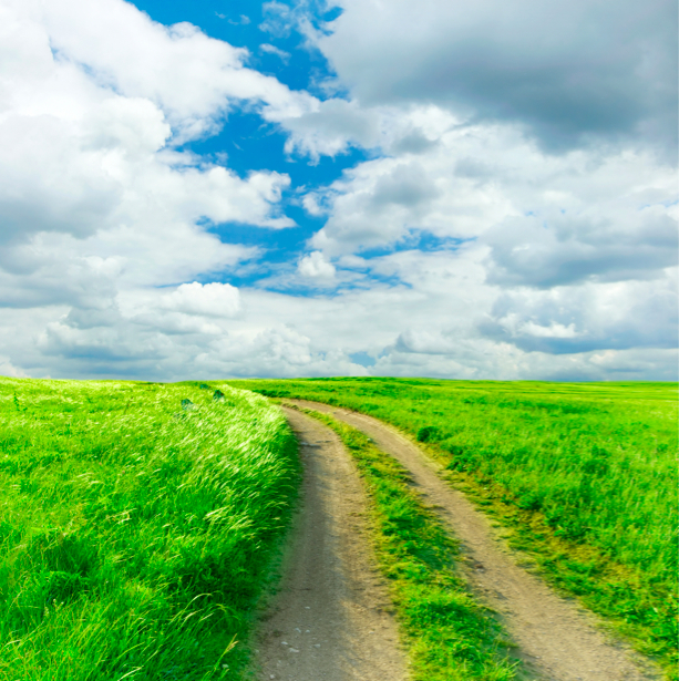 Фотообои природные пейзажи дорога в поле (nature-00165)