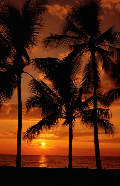 Фотообои море закат пальмы ночь (nature-00280)