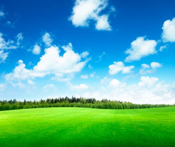 Фотообои пейзаж с полем травы и неба (nature-00330)