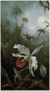 две колибри над белой орхидеи (pf-59)
