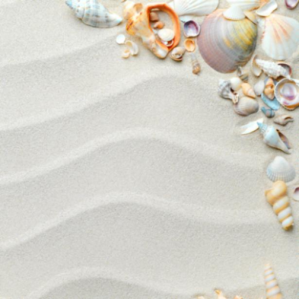 Ракушки на белом песке - Фотообои (sea-0000109)