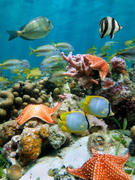 Фотообои подводный мир в море (underwater-world-00002)