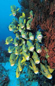 Фотообои в ванную мир подводный рыбки (underwater-world-00199)