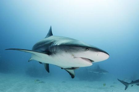 Фотообои Взгляд акулы (underwater-world-00217)