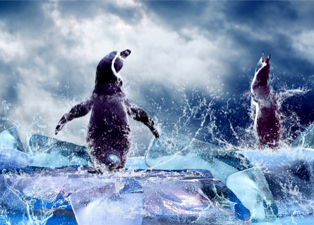 Фотообои пингвины на льду (animals-0000051)