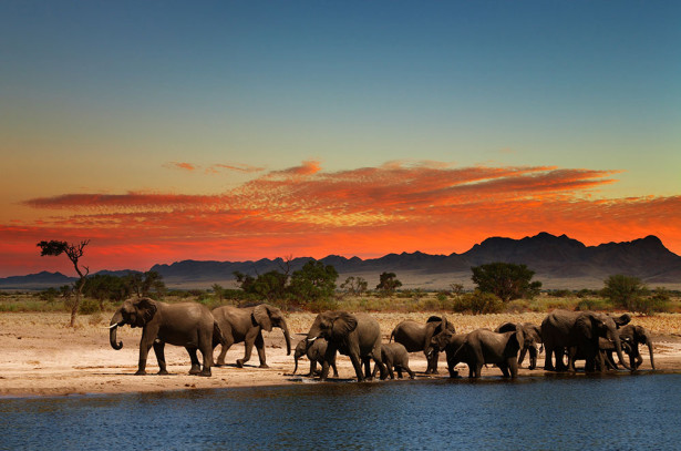 Фотообои Стадо слонов на водопое (animals-549)