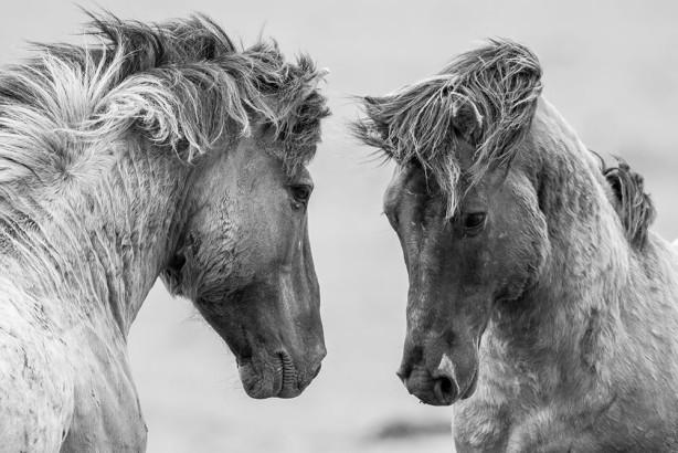 Фотообои Лошади (animals-574)