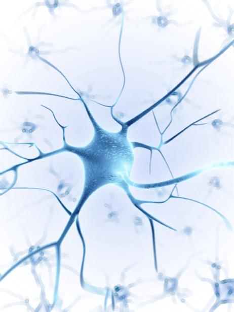 Фотообои нервные клетки (background-0000269)