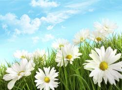 flowers-0000142