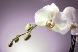 flowers-0000456