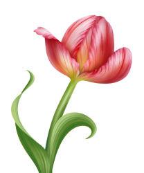 flowers-744