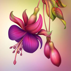 Фотообои Фуксия (flowers-748)
