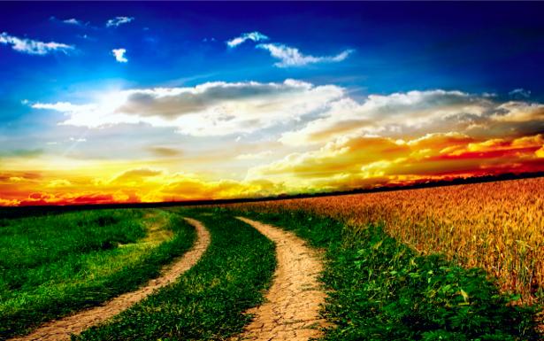Фотообои с природой дорога полевая (nature-00036)