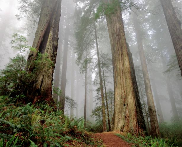 Фотообои лес в тумане (nature-00250)
