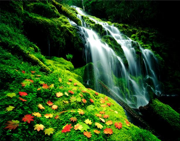 Фотообои горный водопад листья (nature-00384)