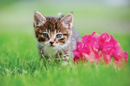 Фотообои котик и цветок (1.0x0.67)