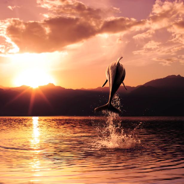Фотообои с природой дельфины закат (animals-0000035)