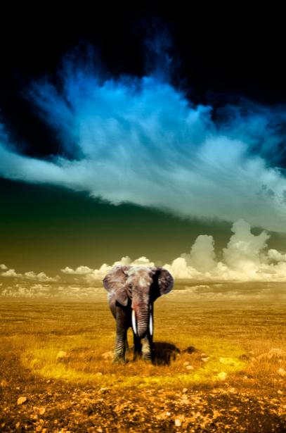 Фотообои слон и небо (animals-0000086)